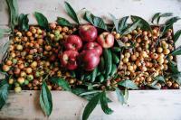 خانه میوه های باربد