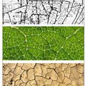 طرح پیشنهادی مهسا شیرعلی برای نهمین دوره جایزه معماری میرمیران (معماری بایونیک)